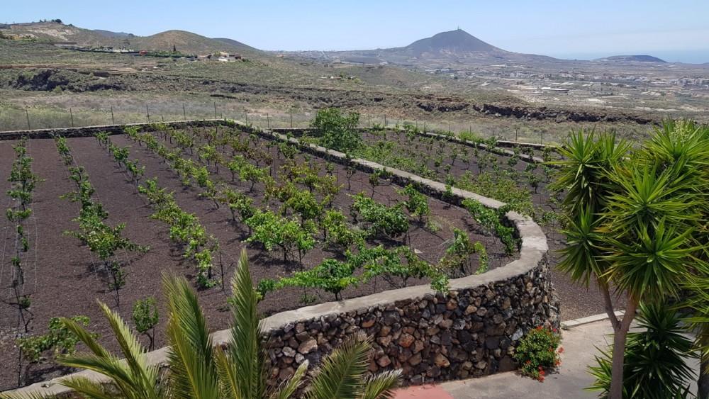 4 bed Villa For Sale in San Miguel de Abona,  - 5
